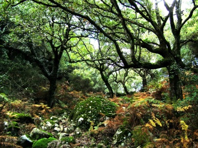 The wildlife rich woodland at Huerta Grande